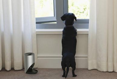 宠物防吠训练器设计,行业洞察下的设计探索