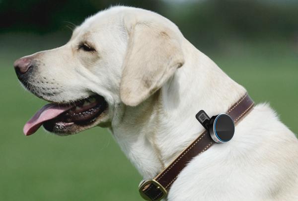 宠物智能穿戴设备设计,创新科技拥抱萌宠生活