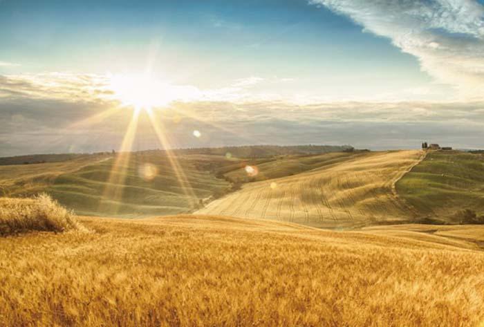 智慧农业品牌战略设计,为向阳坡开发品牌战略